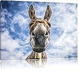 Pixxprint Lustiger Esel, Format: 100x70 auf Leinwand, XXL