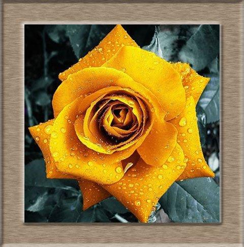 200pcs / pack Rare Pays-Bas Rainbow Rose Flower Seed Outdoor Blooming Bonsai Plante en pot décoratif Decor Garden Livraison gratuite 8