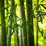 20 Servietten Natürliche Bambusstangen/Bambus/Natur/Asien 33x33cm