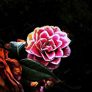 Broken Roses