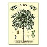 Cavallini Decorative Wrap Poster, Olive Tree, 20 x 28 inch