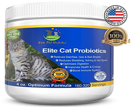 Cat Probiotic Supplements