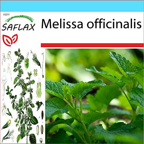 SAFLAX - Confezione regalo - Erba limoncina - 150 semi - Melissa officinalis