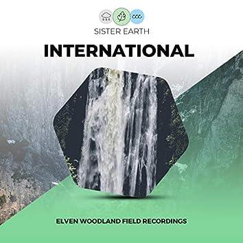 Elven International Woodland Field Recordings