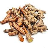 Kurkuma Bio + Ingwer Bio je 300 g: Kurkumaknollen und Ingwerknollen frisch aus Peru   frische Kurkumawurzel + Ingwerwurzel   echter Kurkuma + echter Ingwer ungezuckert   Fresh Tumeric + fresh Ginger