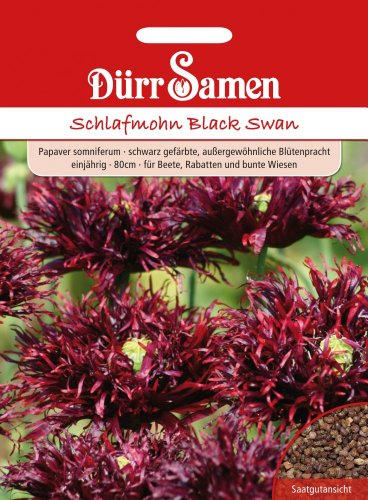 Schlafmohn, Black Swan, Papaver somniferum, ca. 250 Samen
