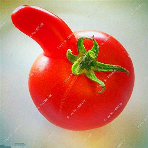 Mixte Tomates cerises Saint Fruit Tomate Graine exotiques savoureux fruit juteux légumes Graine Facile croissance 120 Pcs plantes ornementales 4