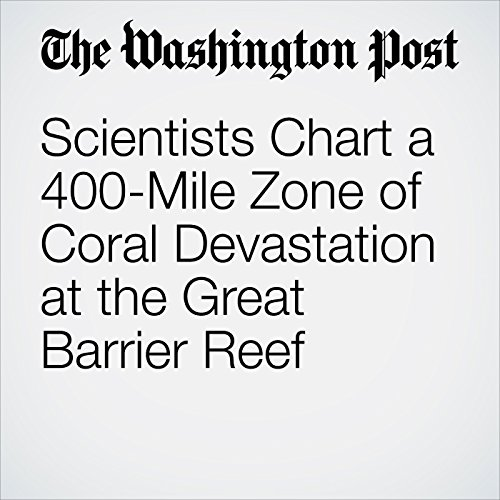 Scientists Chart a 400-Mile Zone of Coral Devastation at the Great Barrier Reef cover art