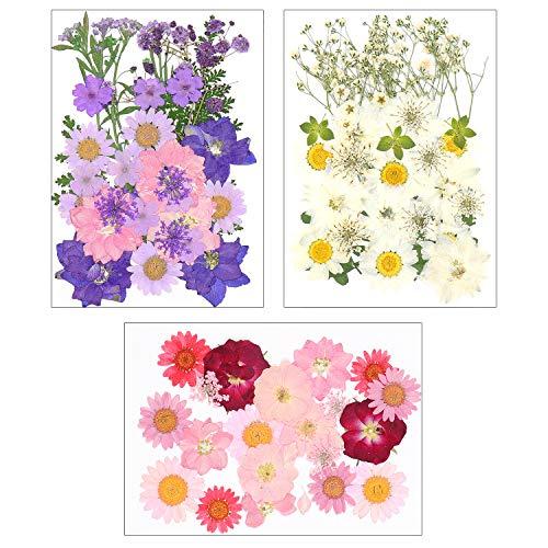 Dreamtop 85 piezas de flores prensadas secas naturales mezcladas múltiples hojas de flores secas pétalos para bricolaje vela resina joyería colgante artesanía hacer arte decoraciones florales