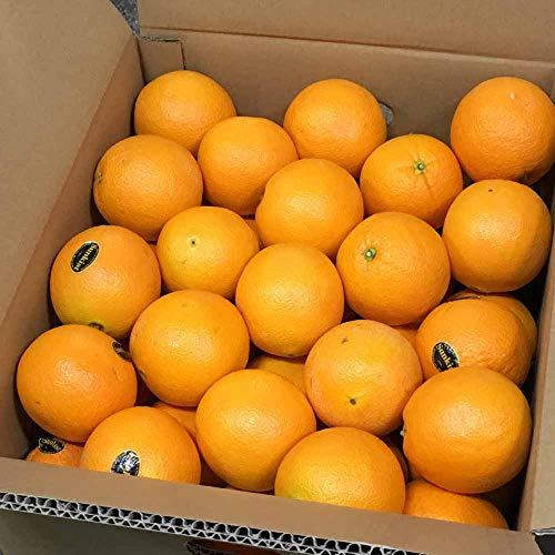完熟 オレンジ 約10kg(48〜66玉) ネーブル バレンシア 果物 フルーツ 「北海道・沖縄は 1100円」