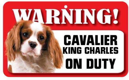 Cavalier King Charles Brun Clair et Blanc (Blenheim) Panneau pour chien – en carte lustrée