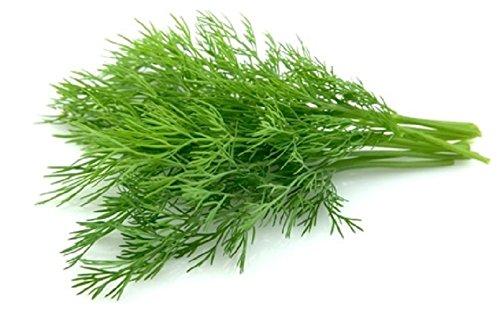 30 graines semences aneth ou faux anis plante aromatique potager