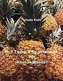 In 5 Tagen 5 kg abnehmen mit Ananas-Wasser (Was alle wollen! 7)