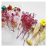 KXLBHJXB 1 Box Echt Getrocknete Blumen Trockene Pflanzen for die Aromatherapie Kerze Epoxidharz-Anhänger Halskette, die Fertigkeit Getrocknete Blumen DIY-Material Getrocknete Blumen