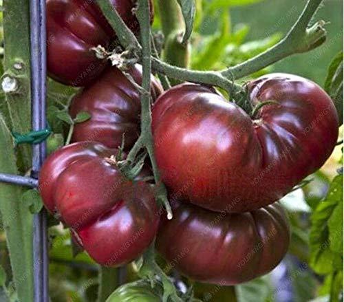 Shopvise/Sac Graines 50pcs tomate Heirloom bio Graines Légumes vivaces non-OGM Graines jardin Plangting: kaki foncé