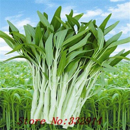 Vente Hot 100 graines / paquet derlook balcon bonsaï légumes graines épinards de l'eau des graines