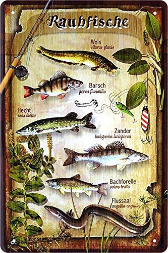 """Blechschild Spruch """"Raubfische, Wels, Barsch, Hecht, Zander ."""" Deko Fisch Hängeschild Türschild Metallschild Fischen Angeln Angel Verein Schild Geschenkidee Angler 20x30 cm"""