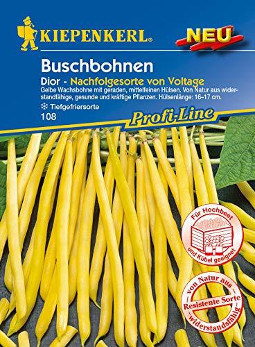Buschbohne Dior, gelbe Wachsbohne mit geraden mittelfeinen Früchten, wiederstandsfähig