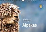 Portraits der kuscheligen Alpakas (Wandkalender 2017 DIN A3 quer): Ein Kalender mit stimmungsvollen Alpaka Portraits. (Monatskalender, 14 Seiten) (CALVENDO Tiere)