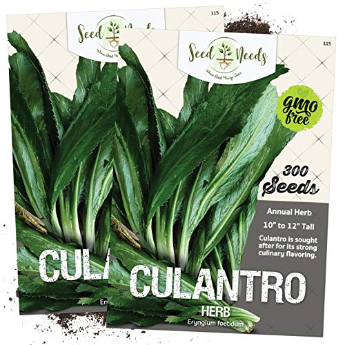 Seed Needs, Culantro Seeds for Planting (Eryngium foetidum) Twin Pack of 300...