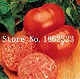Pinkdose 100 teile/beutel Rainbow Tomato Bonsai, seltene Tomatenpflanze, Bonsai Bio-Gemüse & amp; Obst-Bonsai, Topfpflanze für Haus & Garten: 1