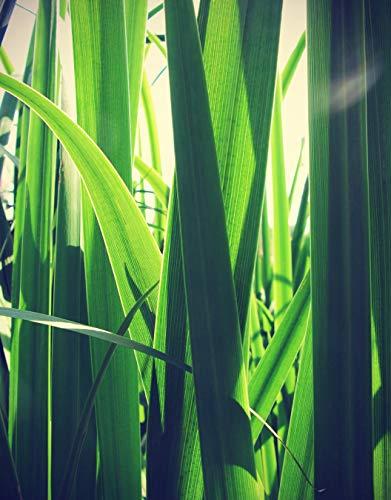 Vliestapete Gras Vintage 100x150 cm - Tapete Wandbild Bildertapete - Grashalm Wiese Pflanze Gräser