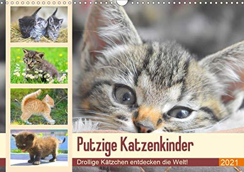 Putzige Katzenkinder. Drollige Kätzchen entdecken die Welt! (Wandkalender 2021 DIN A3 quer)