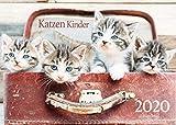 Edition Seidel Katzen Kinder Premium Kalender 2020 DIN A3 Wandkalender Katzenkalender