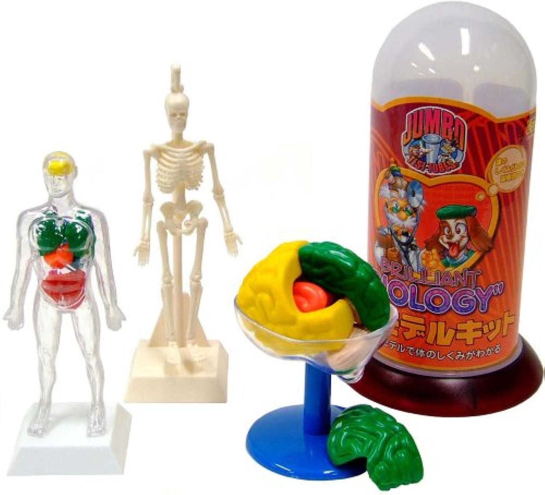 Human Body Model Kit (japan import)