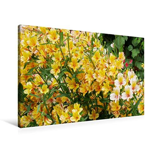 Premium Textil-Leinwand 90 x 60 cm Quer-Format Inkalilien | Wandbild, HD-Bild auf Keilrahmen, Fertigbild auf hochwertigem Vlies, Leinwanddruck von Gisela Kruse