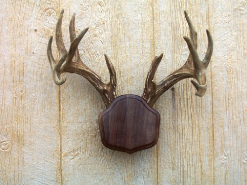 The Taxidermists Woodshop Black Walnut 'The Deer Stand' Antler Mounting Kit