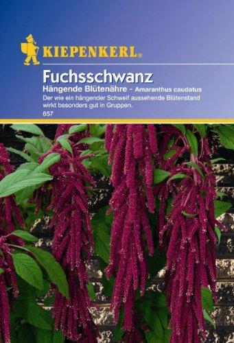 Amaranthus Fuchsschwanz hängend rot