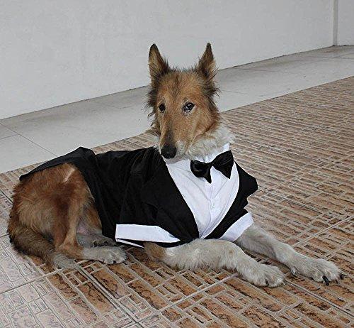 Evursua Großer Hund Smoking Hochzeit Party Anzug Hund Kostüme für große Hunde Golden Retriever Samo Bulldogs, Gentleman Hund Kleidung mit Bowite