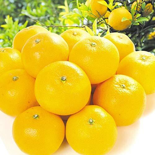 国華園 食品 熊本産 ご家庭用 はっさく 5�s1箱 柑橘