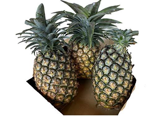 「沖縄県産パイナップル」2個-3個セット (2キロから3キロ)