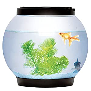Sentik® 5 Litre Glass Fish Bowl LED Light Aquarium Goldfish Betta Tank Accessories (Black) by Sentik