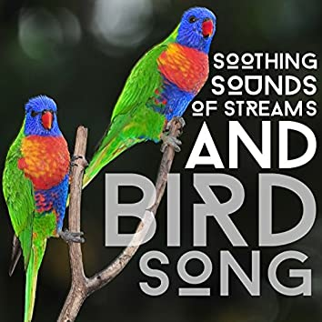 Soothing Sounds of Streams and Bird Song