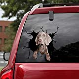 Ocean Gift Gray Weimaraner Car Decals, Wall Decals Stickers Pack of 2 - Realistic Car Stickers Design Series 14 Size 12' x 12'