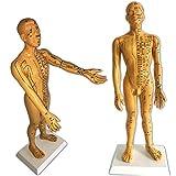 La acupuntura Modelo Masculino - 50cm / 19.6Inch Humano Modelo del punto acupuntura - meridiano acupuntura modelo enseñanza - grande Claro modelo la acupuntura humana con los puntos acupuntura,A