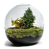 DIY Jardin en Bouteille Durable : Biodome - Édition de Noël...