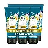 Herbal Essences bio:renew Aceite De Argán De Marruecos Repa