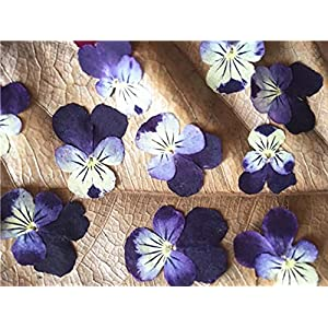 Silk Flower Arrangements Artificial and Dried Flower 120pcs Pressed Dried Pansy Corydalis Suaveolens Hance Flower Plants Herbarium Jewelry Pendant Earrings Making Accessories