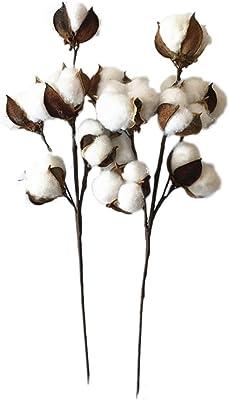 Vosarea algodón Varilla Séché Árbol de algodón Rama Flores ...