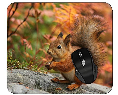 Mouse Pads for Computers Animal Plant Squirrel Wildlife Office Mouse Pad