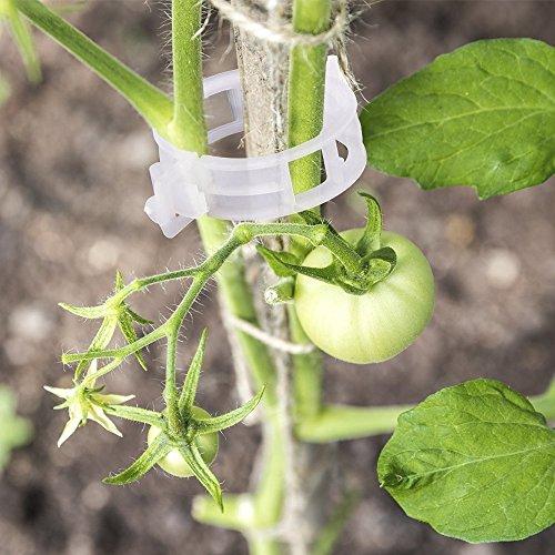 100 pcs Jardin plantes Clips Fleur Clip Idéal pour sécuriser les plantes au Plante Prend en charge - Blanc