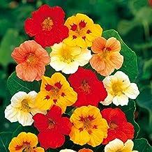 100pcs Perennial Climbing Nasturtium Indian Cress, Tropaeolum majus Hardy Perennial Flower Seeds for Slopes, Fences and Wi...