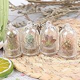 XIDAJIE 4Pcs Live Succulent Terrarium Necklace, Cactus Glass Pendant Wearable Plant Bottle Miniature Terrarium Plant Keychain Accessory