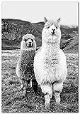 hdbklhjxk Alpaka Schwarz Weiß Tier Poster Boho Wandkunst