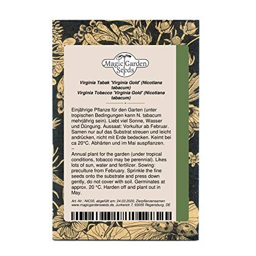 Virginia Tabak 'Virginia Gold' (Nicotiana tabacum) 500 Samen, helle Sorte