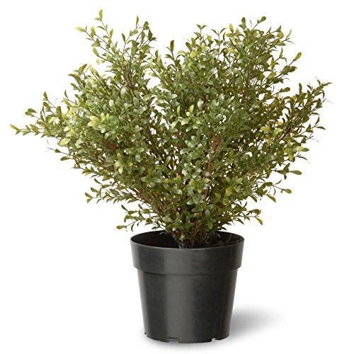 National Tree Company Artificial Shrub   Includes Pot Base   Argentea Plant - 24 Inch